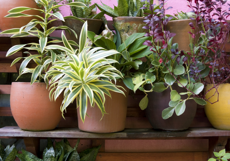 Plant yourself some productive pots!