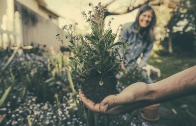 Guide to gardening for wellbeing