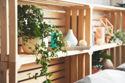Home trend: growing Ivy indoors