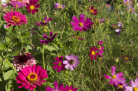 The nation's favourite summer bedding plants have been named