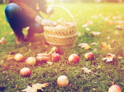 What to do in the garden in October?